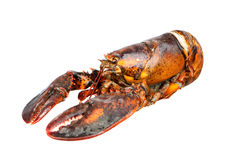 Nice piece of lobster Royalty Free Stock Photos