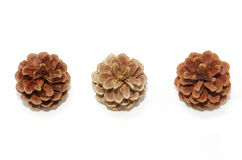 Nice pine cones on a white background Stock Image