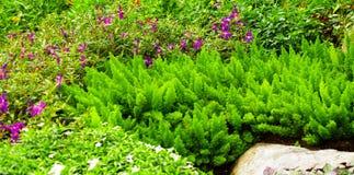 Nice plant background Stock Image
