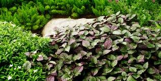 Nice plant background Stock Photos
