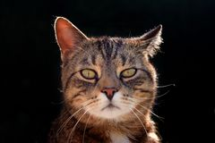 Nice portrait cat , close up Royalty Free Stock Photos