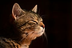 Nice portrait cat , close up Stock Photos