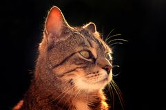 Nice portrait cat , close up Royalty Free Stock Photography
