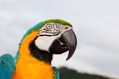 Nice portrait of a parrot royalty free stock photo