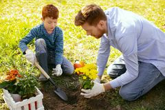 Nice positive father and son working together. Family cooperation. Nice positive father and son working together while planting flowers in their garden royalty free stock photo