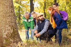 Nice positive young children looking for mushrooms royalty free stock photo