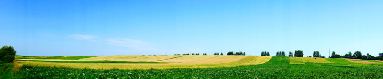 Nice potato field by  summertime. Royalty Free Stock Image