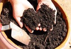 Nice potting soil. Hands holding nice potting soil stock photos