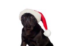 Nice pug dog with Christmas hat Stock Photo