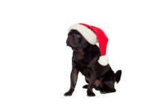 Nice pug dog with Christmas hat Royalty Free Stock Photos