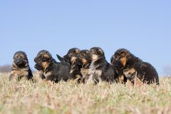 Nice puppies on meadow Royalty Free Stock Photography