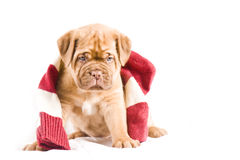 Nice Puppy Stock Images