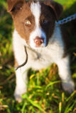 Nice puppy Royalty Free Stock Photography
