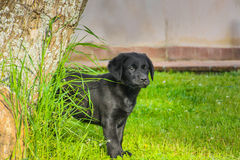 Nice puppy in a field. 2 royalty free stock photography