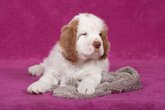 Nice puppy posing on pink background Stock Photos