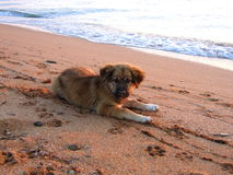 Nice puppy on the seabeach Royalty Free Stock Images