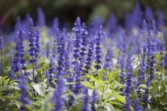 Nice purple flowers. Nice background of purple flowers Stock Photography