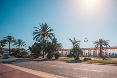Nice Quay - a view of the palm trees. Against the backdrop of the sea royalty free stock image