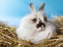 Nice rabbit Royalty Free Stock Photography