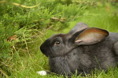 Nice rabbit Stock Photography
