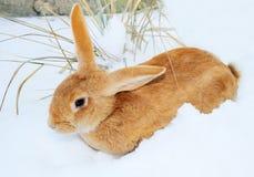 Nice rabbit on snow stock photography