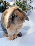 Nice rabbit on snow. Pretty rabbit sit on snow Stock Photo