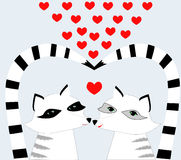 Nice Racoons  in love Stock Photography