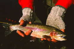 Nice Rainbow Trout. A nice rainbow trout being shown off by the fisherman Royalty Free Stock Photo