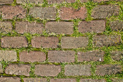 Nice red bricks with grass background. Red bricks with grass background stock photography