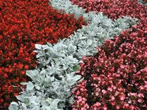 Beautiful red flowers and leafs in park, Lithuania stock photography