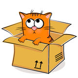 Nice red kitten in box Stock Photos
