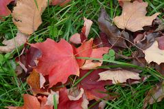 Leafs on ground royalty free stock photos