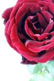 Nice red rose photo stock photo