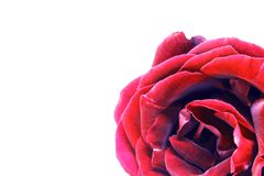 Nice red rose photo stock photos