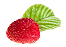 Nice and red single raspberry with leaf Royalty Free Stock Photo