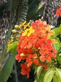 Beautiful exotic flower. Nice red and yellow flower royalty free stock images