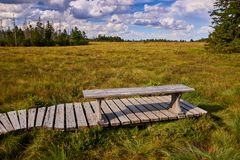 Nice resting place in woodland. Spruce park peat grass hochmoor born tree bog torfhaus swamp harz fern german oberharzer mountains forest peaty cotton trees stock photo