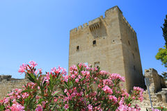 Nice rhododendron flowers in Kolossi Castle. Cyprus Royalty Free Stock Images