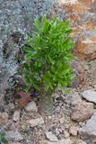 Desert vegetation. Nice rocky desert green vegetation Royalty Free Stock Images