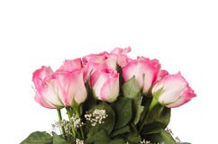 Nice roses Stock Images