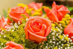 The nice roses in celebration concept Stock Image