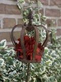 Nice roses Royalty Free Stock Image
