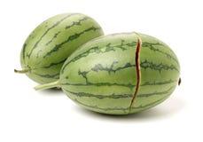 Nice round watermelon royalty free stock image