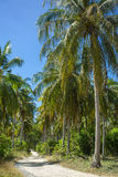 Nice rural road with palm trees Royalty Free Stock Images