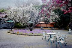 Nice sakura backbround Stock Photo