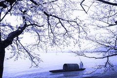 Nice sakura place Stock Image