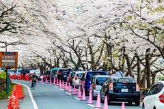 Nice sakura place Stock Images