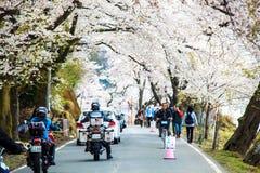 Nice sakura place Royalty Free Stock Photo