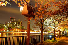 Nice sakura beside the river, Japan Royalty Free Stock Photo