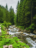 Nice scene with mountain river Prut in green Carpathian forest Stock Photography